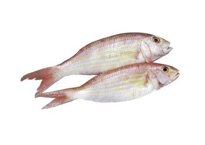 THREADFIN BREAM_new